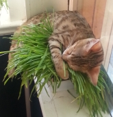 2015-07-27 Persephone grass (5)