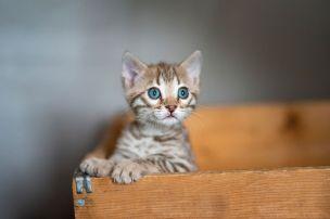 Kittens(122)copy