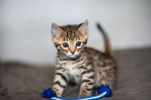 Kittens(56)copy
