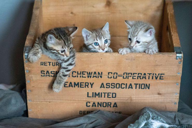 Kittens(89)copy
